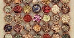 Fitoterapia: qué es, plantas medicinales y beneficios