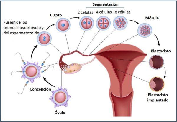 embarazo-y-sangrado-implantacion